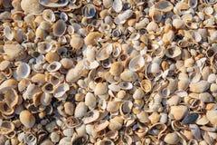 La playa se cubre con las cáscaras multicoloras de crustáceos Foto de archivo libre de regalías