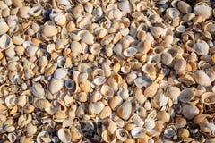La playa se cubre con las cáscaras multicoloras de crustáceos Imágenes de archivo libres de regalías