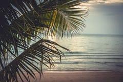La playa tropical de la puesta del sol con la palmera se va como fondo de las vacaciones de verano con el espacio de la copia en  Fotos de archivo libres de regalías
