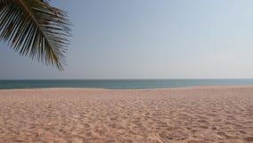 La playa tropical del paraíso con las palmas de la arena y de Cocos viaja concepto amplio del fondo del panorama del turismo metrajes