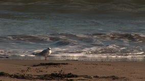 La playa y la línea de la playa como pájaro hace una pausa ondas metrajes