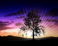 La pleine lune lumineuse. Images libres de droits