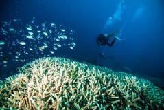 La plongée à l'air de l'eau bleue de plongeur bunaken l'océan de récif de mer de l'Indonésie photos libres de droits