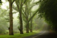 La pluie de l'été en montagnes bleues Photos libres de droits