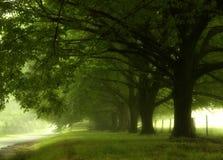 La pluie de l'été en montagnes bleues Image libre de droits