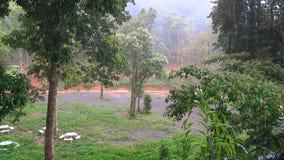 La pluie tombe dans la forêt profonde tropicale banque de vidéos
