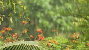 La pluie tombe dans le tropical clips vidéos