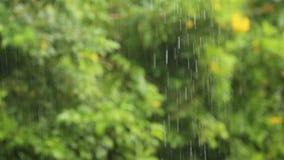 La pluie tombe dans le tropical banque de vidéos