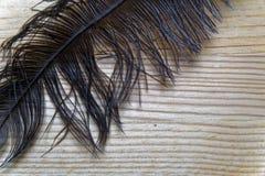 La pluma decorativa del primer para adorna el fondo o la postal Fotos de archivo libres de regalías