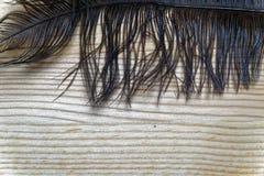 La pluma decorativa del primer para adorna el fondo o la postal Imágenes de archivo libres de regalías