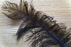 La pluma decorativa del primer para adorna el fondo o la postal Imagenes de archivo