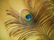 La pluma del pavo real Imágenes de archivo libres de regalías