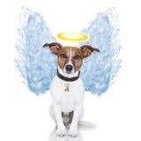 La pluma del perro del ángel se va volando aureola Fotos de archivo libres de regalías