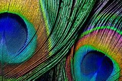 La plume de paon, se ferment  images libres de droits