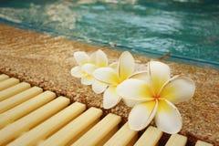 La plumeria fiorisce e dettaglio dell'acqua increspato piscina blu Immagini Stock Libere da Diritti