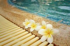 La plumeria fiorisce e dettaglio dell'acqua increspato piscina blu Immagini Stock