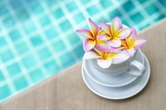 La plumeria fresca variopinta entra nella tazza di caffè macchiato sopra il fondo blu vago dell'acqua della piscina fotografie stock libere da diritti