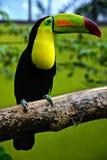 La plupart de perroquet vert de dock d'arbre de beaux oiseaux images stock