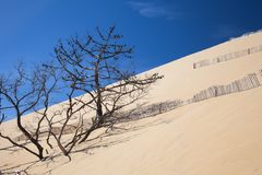 La plus haute dune de sable en Europe Pilat Image libre de droits