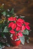 La poinsettia de Noël a isolé mis en pot sur le fond rustique de vintage Image modifiée la tonalité image stock