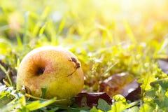 La poire dans l'herbe images libres de droits