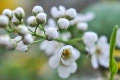 La poire ou l'Apple fleurissent sur comporter nuageux de journée de printemps fantastique image libre de droits