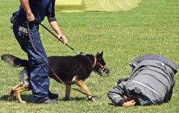 La polizia equipaggia ed il suo cane Fotografia Stock