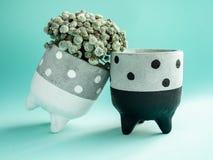 La polka noire et blanche de couples pointillent les planteurs concrets Planteurs concrets peints pour la décoration à la maison photos stock