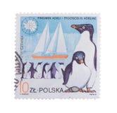 LA POLOGNE VERS 1987 : Un timbre a imprimé dans les expositions le pingouin, cercle Image stock