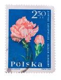 La Polonia - circa 1964: guarnizione del bollo in carnati di norma di manifestazioni Immagini Stock Libere da Diritti