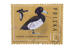 LA POLONIA - CIRCA 1985: Un bollo stampato nella mostra del circ dell'anatra Immagini Stock