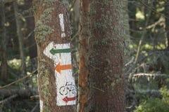 La Polonia, montagne di Gorce, via che traccia i segni Fotografia Stock Libera da Diritti