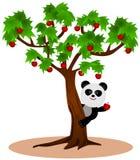 La pomme du panda Image libre de droits