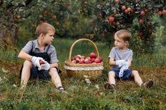 La pomme rouge blonde en osier d'arbres d'herbe verte de garçon peu de panier deux de sélection de jardin d'aide fonctionnent le  image stock