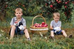 La pomme rouge blonde en osier d'arbres d'herbe verte de garçon peu de panier deux de sélection de jardin d'aide fonctionnent le  images libres de droits