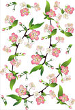 la pomme s'embranche les arbres fleurissants Photos stock