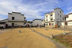 La population rurale sèche le riz nouvellement moissonné, l'adobe RVB photographie stock libre de droits
