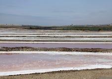 La porpora ed il rosa salano le poltiglie sulla costa Fotografia Stock