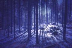 La porpora mistica ha colorato il paesaggio dell'albero forestale fotografia stock libera da diritti