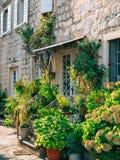 La porte blanche à la maison avec un seuil avec des étapes, un énorme engourdissent Image stock