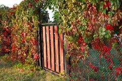 La porte et la vigne décorative part avec les feuilles rouges Rura d'automne Photos stock