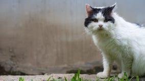 La posa del gatto Immagini Stock