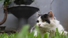 La posa del gatto Immagine Stock