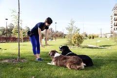 La pose de deux chiens obéissent le professionnel de la manutention s'exerçant images libres de droits