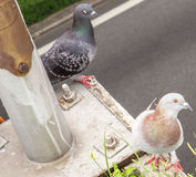 La position d'oiseau images stock