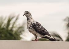 La position d'oiseau photographie stock libre de droits