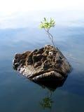 La potencia de plantas Imagen de archivo libre de regalías
