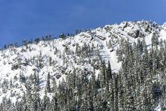 La poudre a couvert l'hiver Forest Landscape de neige sur des falaises de montagne Ridge Photo stock