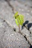 La pousse de l'arbre Image stock