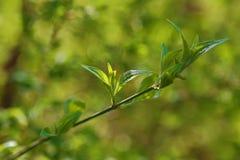 La pousse de ressort allumée avec le soleil Photographie stock libre de droits